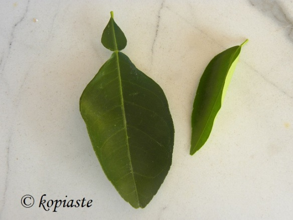 citrus leaves